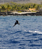 Jan 18, 2010 - Spinner Dolphin