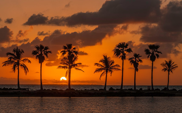 Matheson Hammock Park at Sunrise