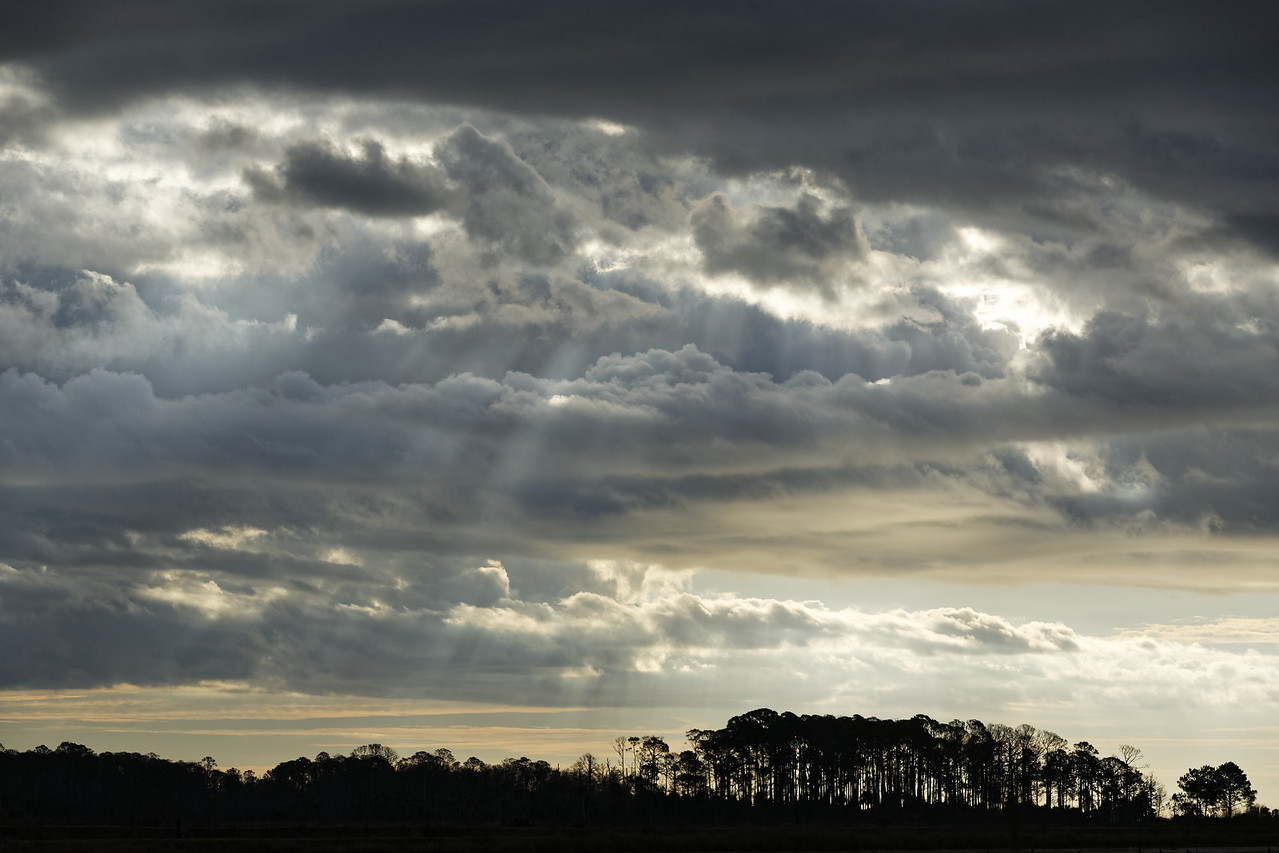 Dramatic rays of light shine through the clouds over the longleaf pine stands