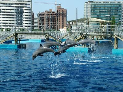 dolfins air