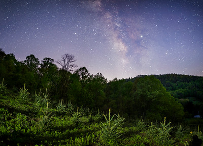 Tree Farm Below the Milky Way