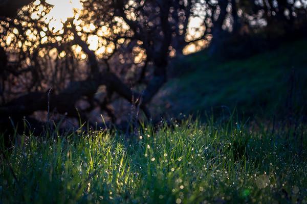 sunrise on dew drops at rancho san antonio