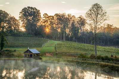 Jolo Vineyard Sunrise
