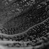 Cole leaf — Kelkápuszta