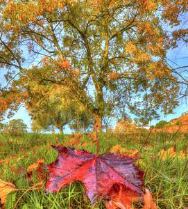 Autumn in Gladstone Park