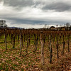 Vineyard near Italian Solvenian Border