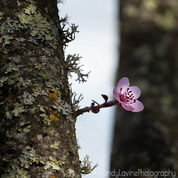 Single Flower and Tree Trunk