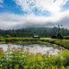 Mill Brook Farm, Cornish, NH