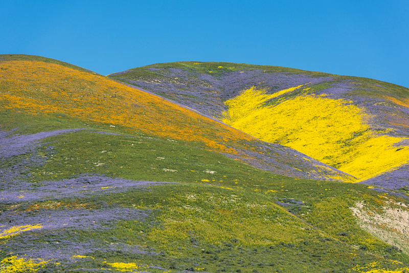 Wildflower Palette, California