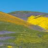 Wildflower Palette, California