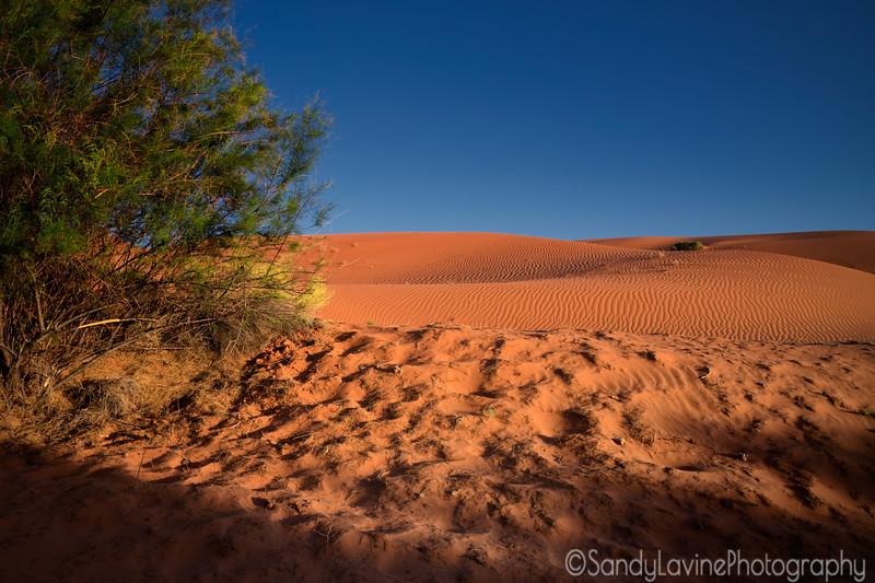 Monument Valley Dunes
