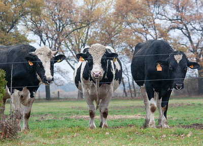 bulls-pasture-rbb_151111-0004