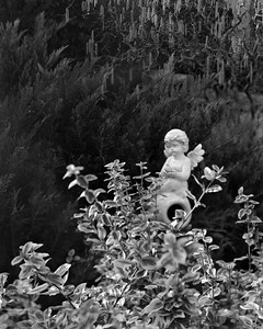 Cupid in the Garden — Kerti puttó