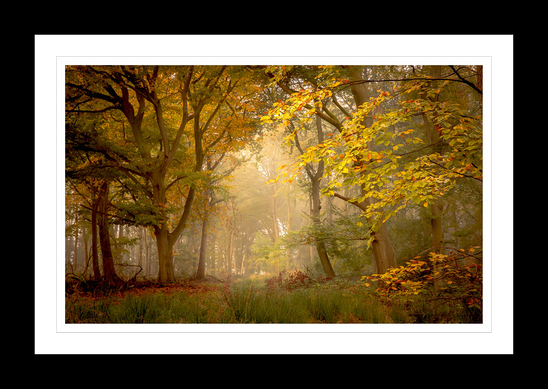Autumn in Warwickshire
