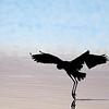 Heron Silhouette; 500mm 1/2000 f/4 ISO 2,200