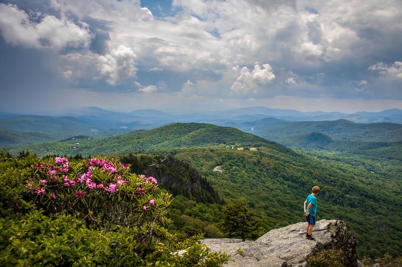 Grandfather Mountain Bloom
