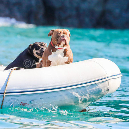 Dogs in a boat