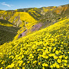 Spring in the Temblor range, California