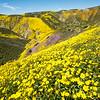 Spring in the Temblor range, California