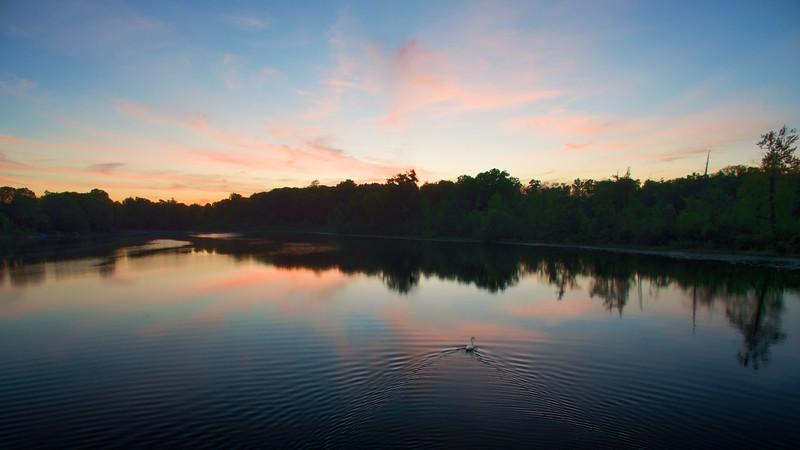 A swan floats at dusk
