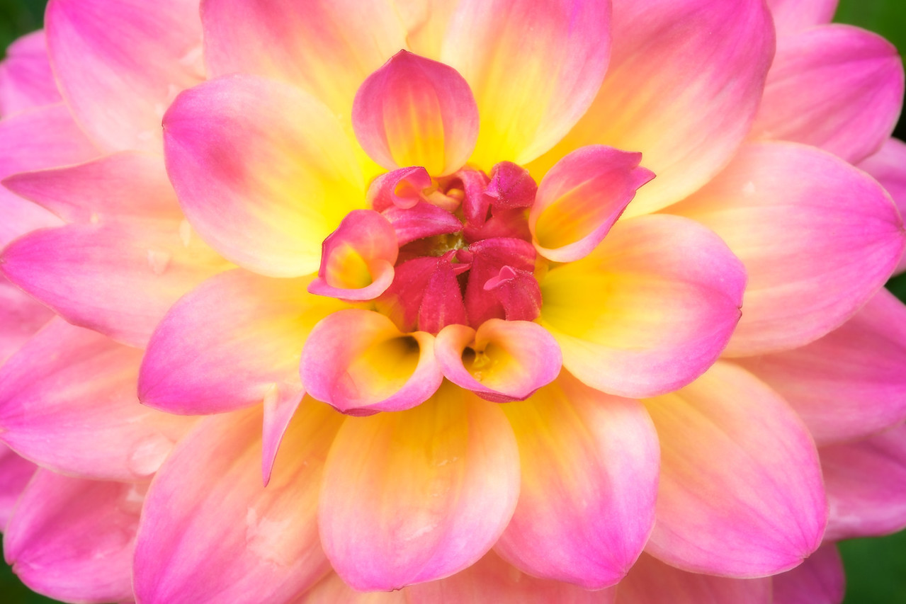 2014-06 Flowers 0230 edit