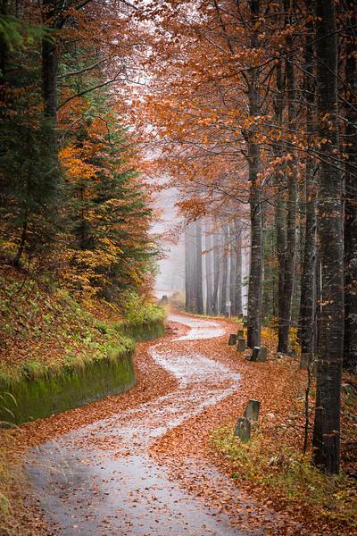 Autumn woods, Slovenia