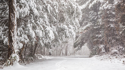 Greensboro Snowy Trail