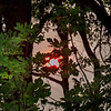 Eerie red sun rising behind the trees. Fires.