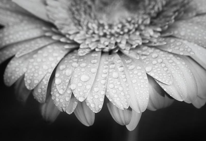 2014-06 Flowers 0346 edit-2 edit