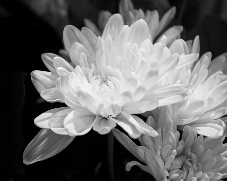 flowers (monochrome)
