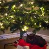mcfluffin under the tree