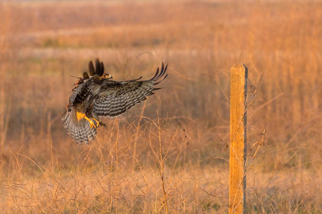 Hawk Landing, Merced NWR
