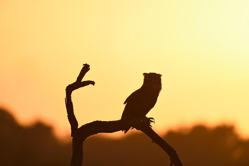 Verreaux's Eagle-owl; 500mm 1/1250 f/4 ISO 160