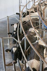 milking_parlour_157