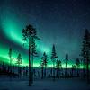 Enchanted forest, Sweden