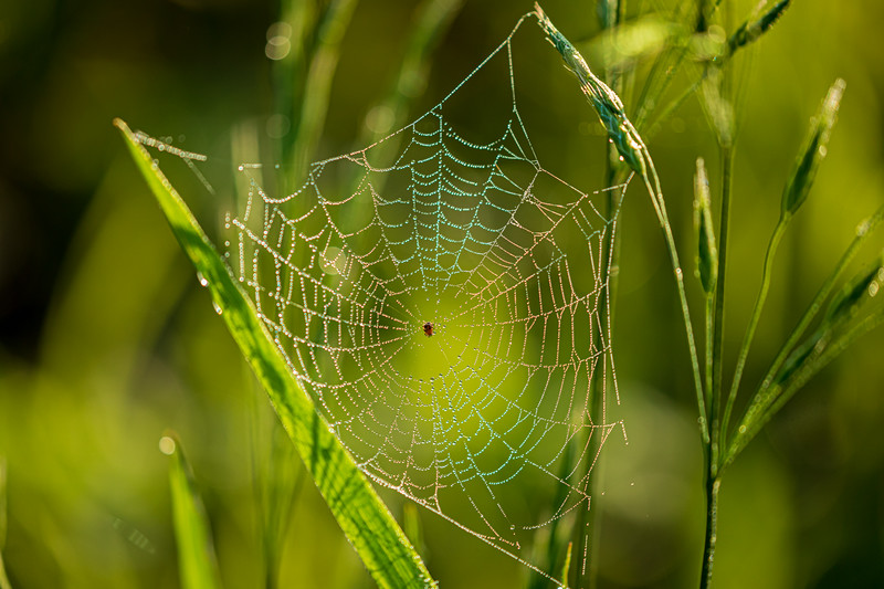 Pickett's Web