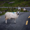 Ballaghbeama Gap, County Kerry, Ireland (July 2017)