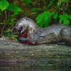 First we saw an otter chowing down on a log. Taken in the dark!