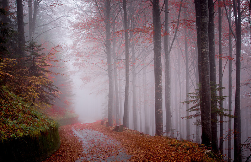 Moody forest, Solvenia
