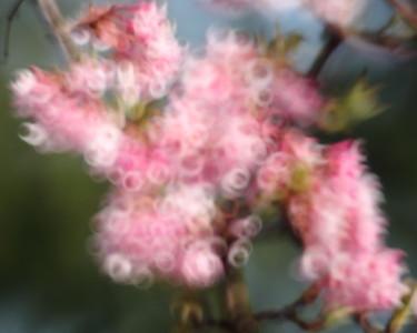 Spring Buzz — Tavaszi zsongás