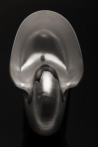 Hommage á Edward Weston I—Nautilus