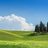Cyrpus trees, Tuscany