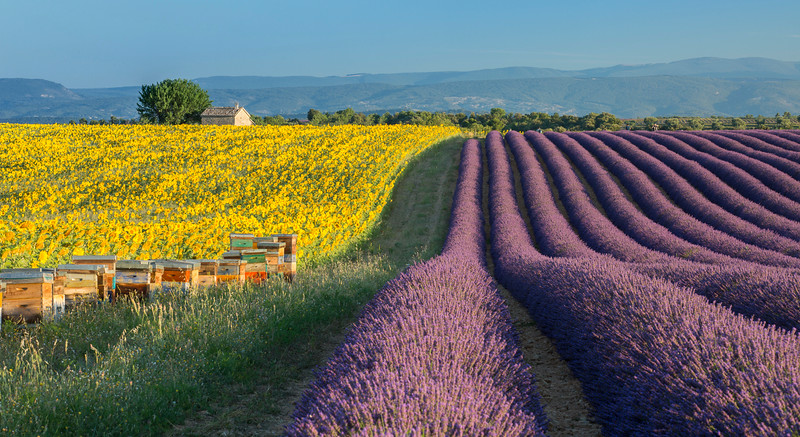 Valensole beehives