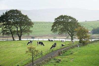 cows-pasture-scotland_181002-0001