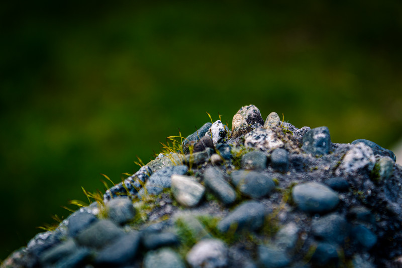 coarse concrete and moss