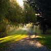 radiant trail