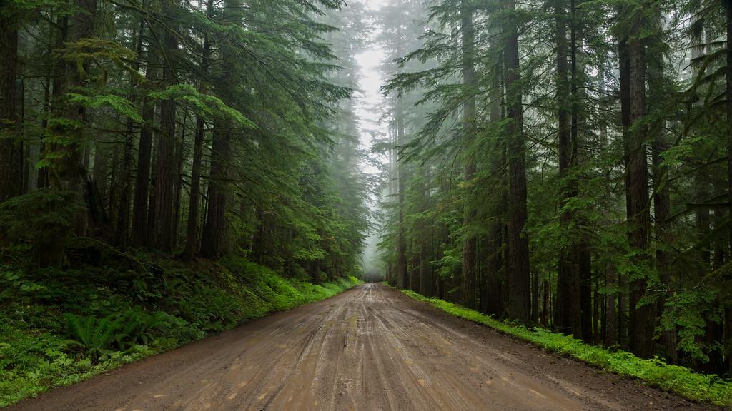 Serenity, Mt. Rainier NP