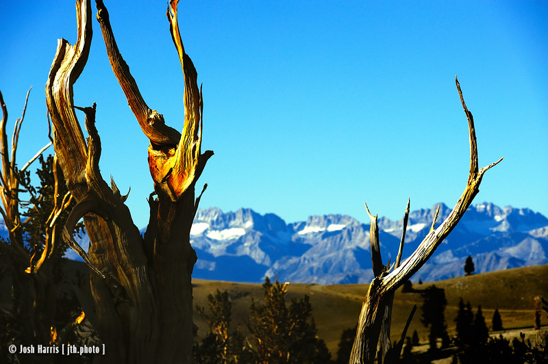 Ancient Bristlecone Pine Forest, September 2013.