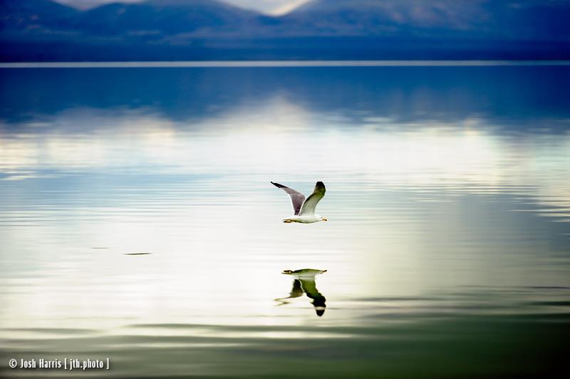 Mono Lake, May 2015.