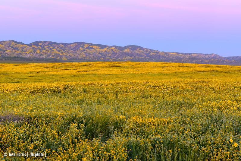 Carrizo Plain National Monument, April 2017.